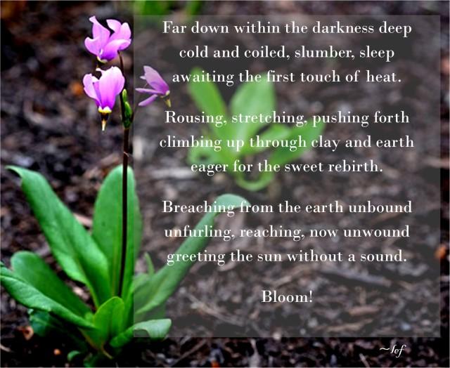 Bloom _ Wolf 06152015